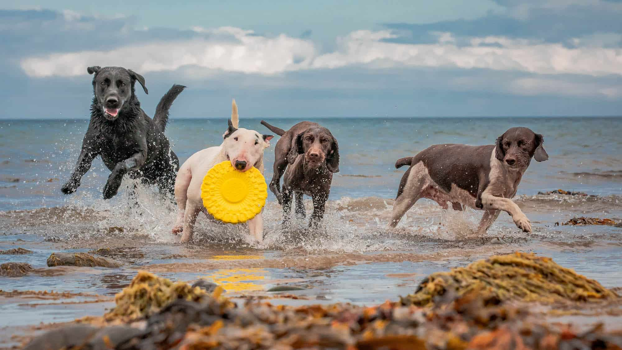 Group of happy dogs on the beach